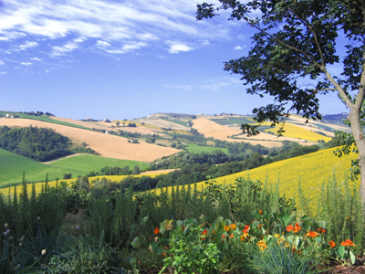 Italy Agriturismo B&B Holiday Apartments and Mini Camping in Le Marche