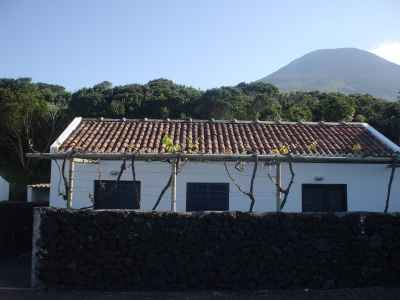 Portugal Retreat of Goats Pico Island Azores Cottage